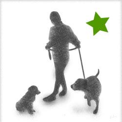 Swissydog Sennenhund