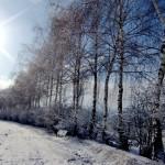 Winterlandschaft, Hecke zwischen den Feldern